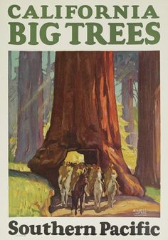 Maurice Logan (1886-1977).  California Big Trees / Southern Pacific. 1927