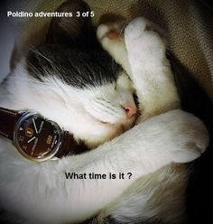 Egotempo... Latest tests presale for Preludio wristwatch!  The fierce Poldino tests Preludio in dangerous conditions ...  Egotempo, just for passion... Enjoy your time with Preludio ... http://www.egotempo.it/