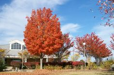 Fall at the Georgia Visitor Information Center in Lavonia, located at 938 County Road.