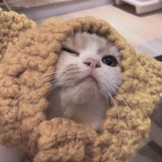 Cute Baby Cats, Cute Funny Animals, Cute Baby Animals, Kittens Cutest, Cats And Kittens, Cute Cat Memes, Cute Cat Wallpaper, Cat Icon, Cat Aesthetic
