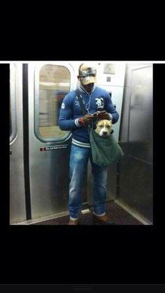 super cute dog in bag