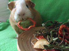 Food4Buns Holiday Piggy Treat Mix, 2 oz. Contains rosebuds, strawberry leaves, echinacea (THE super immune booster and very popular with piggies), all freshly self dried dandelions, tomato rings, apple and banana slices. All high in vitamin C. The perfect healthy gift for your guinea pigs!