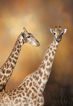 This image was taken in Botswana, Africa.