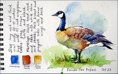 Watercolors by Maria Stezhko (Акварели Марии Стежко): art supplies