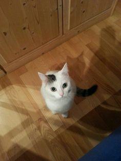My cat Lissy :)