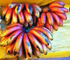 Image result for banana species