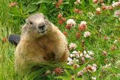 Happy Groundhog Day!  from Thyme In Grammy's Kitchen: Since You Asked - Dirt Pie!