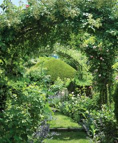 Secret Eden - The Hoops Walk, with poppies, hollyhocks, Nepeta, and roses, among many other plants.