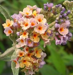 Perennial Herbs by zone!