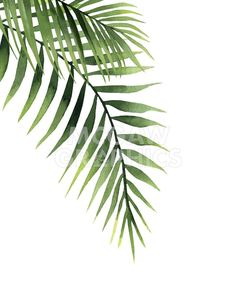 size: Stretched Canvas Print: Palm by Ann Solo : Using advanced technology, we print the image directly onto canvas, stretch it onto support bars, and finish it with hand-painted edges and a protective coating. Leaf Drawing, Plant Drawing, Palm Tree Drawing, Drawing Art, Watercolor Plants, Watercolor Leaves, Simple Watercolor Paintings, Leaf Paintings, Easy Watercolor