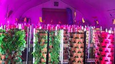Regina Food Bank now growing its own food in greenhouse