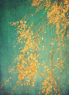 Whispers of Yellow als Leinwandbild von Ingrid Beddoes | JUNIQE