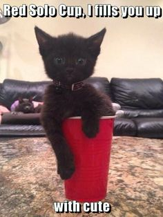 Red Solo Cup, I fills you up  with cute http://cheezburger.com/9001672448