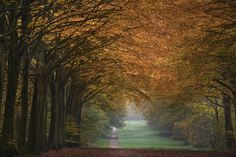 Great Wood Alley - Fototapeter & Tapeter - Photowall