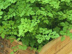 Easy hard to kill herb garden