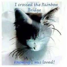 """""""I crossed the Rainbow Bridge knowing I was loved!"""" I hope you did Yuki. Crazy Cat Lady, Crazy Cats, Bambi, I Love Cats, Cute Cats, Rainbow Bridge Cat, Rainbow Bridge Quotes, Pet Loss Grief, Pet Remembrance"""