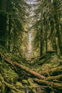 Broken Log Path photo by Tuce ( on Unsplash Conceptual Photography, Outdoor Photography, Landscape Photography, Nature Photography, Oregon Forest, Forest Pictures, Forest Wallpaper, Green Photo, Beautiful Forest