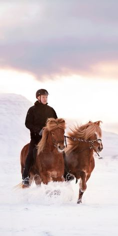 Many Icelanders are passionate about horses and a part of the Icelandic horse community. The community treasure professionalism, education and knowledge sharing, making riding a way of life. Photo by Gigja.