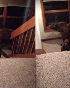 Rodni Gin je došao kući posle napornog dana na poslu i sve što je želeo jeste da se odmori, ali su ga iznenadili nepoznati gosti, medvedi!