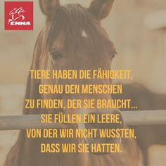 Deutsch - New Ideas Equine Quotes, Horse Quotes, Horse Love, Horse Girl, Delete Quotes, Spiritual People, All About Horses, Keep Calm And Love, Dog Photography