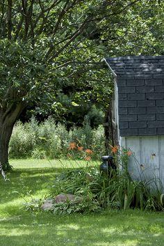 A barn like shed with heirloom daylilies & hosta