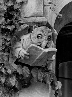 Gargoyle owl reading a book.