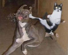 Kung Fu Cat and Dog