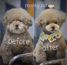 -repinned- Before & After dog grooming photos                                                                                                                                                                                 Mais