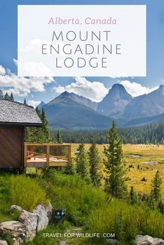 Searching for Canmore cabins or lodges at Canmore? Head south to Mount Engadine Lodge an find out why it's the best place in Alberta, Canada to see moose! via @travel4wildlife