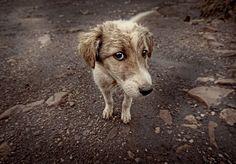 Πρόγραμμα υιοθεσίας αδέσποτων ζώων υλοποιεί ο Δήμος Τρίπολης