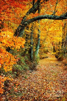 Landscape Photography Tips: Autumn Pathway by Cheryl Davis