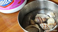 Clean Seashells Step 2.jpg