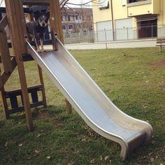 blue heeler on the slide