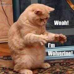 I'm Wolverine!
