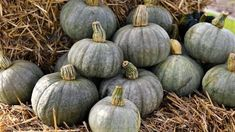 10 pravidel, jak správně pěstovat dýně hokaido, vhodné odrůdy dýně hokaido. Nejlepší recepty  z dýně Hokkaido. Jak a proč dýně pomáhají zdraví Pumpkin, Vegetables, Food, Composters, Buttercup Squash, Meal, Pumpkins, Essen, Vegetable Recipes