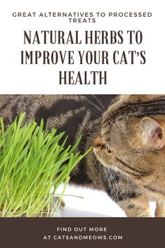 Natural Herbs to Improve Your Cat's Health - Great Alternatives to Processed Treats
