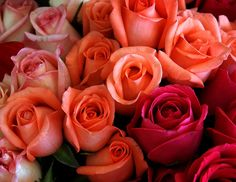 rosa by Armando Esper - Photo 125566749 / 500px