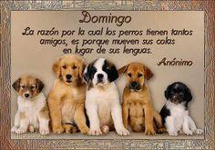 La razón por la cual los perros tienen tantos amigos, es porque mueven sus colas en lugar de sus lenguas.