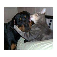 猫と犬の力関係が変わったwwww:ハムスター速報