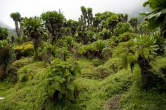 2/13 1c) Congo has two mountain ranges, the Rwenzori Mountains and the Virunga Mountains. This image is a picture of the Rwenzori Mountains. This information was taken from, http://en.wikipedia.org/wiki/Category:Mountain_ranges_of_the_Democratic_Republic_of_the_Congo