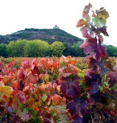 Viñedos en Otoño de La Rioja, un espectáculo