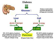 http://obat-khusus-diabetes.blogspot.co.id/2016/08/penyebab-terjadinya-diabetes-dan-obatnya.html