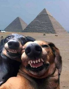 funny animals can't stop laughing . funny animals videos can't stop laughing . funny animals with captions . Funny Animal Jokes, Funny Dog Memes, Funny Animal Videos, Hilarious Jokes, True Memes, Dog Funnies, Lmfao Funny, Hilarious Sayings, Fun Jokes