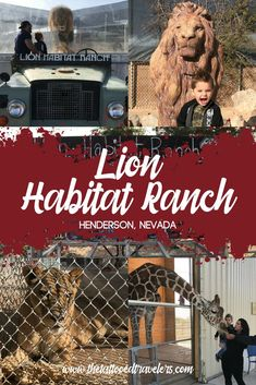 Spending An Afternoon At The Lion Habitat Ranch In Las Vegas Las Vegas Vacation, Vacation Spots, Vacation Ideas, Utah Vacation, Girls Vacation, Ranch, Las Vegas With Kids, Henderson Nevada, Nevada Usa