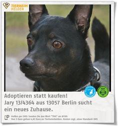 Der selbstbewusste Jary sucht eine neue Bezugsperson im Tierheim Berlin.  http://www.tierheimhelden.de/hund/tierheim-berlin/terrier_pinscher_mix/jary_134364/10333-0/  Jary läuft prima an Radfahrern, Joggern und Schafen vorbei und hat auch Respekt gegenüber Pferden. Er könnte also auch für Reiter geeignet sein. Bisher lebte er in Gruppenhaltung. Kinder ab 12 Jahren wären kein Problem.