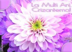 Felicitare de Florii cu mesajul La multi ani, Crizantema!