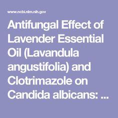 Antifungal Effect of Lavender Essential Oil (Lavandula angustifolia) and Clotrimazole on Candida albicans: An In Vitro Study