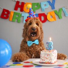 Birthday Dog - Great Activities For Dog Birthday Parties - Dog with Puppy Dog First Birthday, Puppy Birthday Parties, First Birthday Pictures, Puppy Party, Animal Birthday, Diy Pour Chien, Dog Cakes, Dog Photography, Animal Party