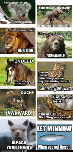 I'm a huge fan of puns. And all of these animal puns literally made me laugh out loud! So funny/cute! Animal Captions, Animal Puns, Funny Animal Quotes, Funny Animal Pictures, Funny Animals, Animal Humor, Funniest Animals, Animal Sayings, Funny Sayings