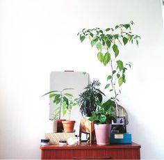 Plants is always a good idea
